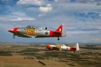 Photo: South African Air Force, North American T-6 Texan, 7728